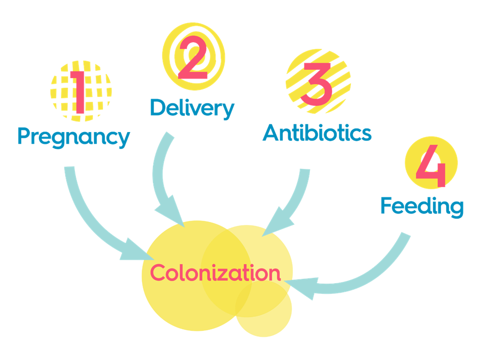 Baby probiotic and the four steps of colonization